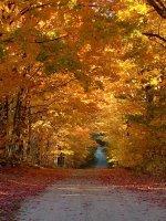 fall 2016.jpg